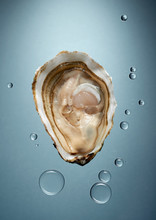Oyster With Water Drops Against Gray Background