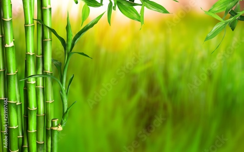 Foto op Canvas Bamboo Many bamboo stalks on background