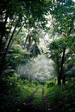 Path Between The Jungle