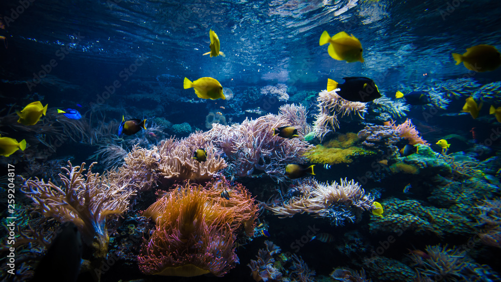 Fototapeta underwater coral reef landscape  with colorful fish