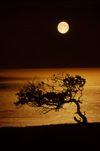 View Of Hawthorn Tree Against Sea During Night