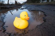 Plastic Duck In Large Pothole
