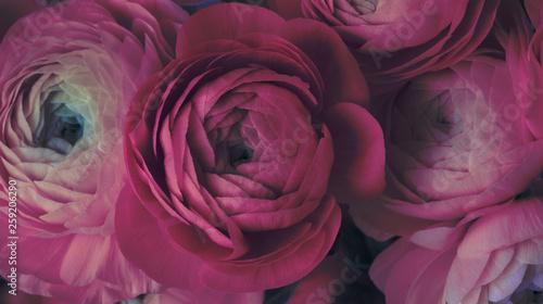 Slika na platnu Pink anemone flower bouquet
