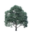 single tree on white background, 3d rendering,clipping path
