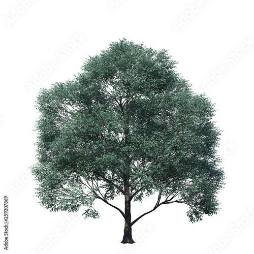 Fototapeta single tree on white background, 3d rendering,clipping path obraz na płótnie