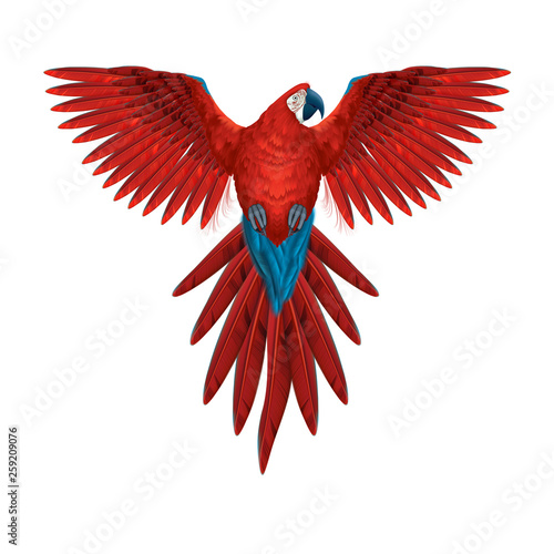 Colourful macaw parrot - multicoloured isolated flying bird- realistic and detailed illustration -  symmetrical design Fotomurales