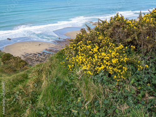 Canvas Print Beautiful coast path between Widemouth Bay and Bude on the wild and scenic Corni
