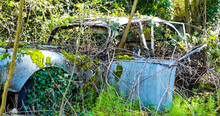 Public View Of A Long Abandoned And Weathered Wreck Of An Old Motor Car, With Trees Growing Through. Ivy Covering Wheels & Tyres. With Mosses On Wing And Door. England