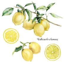 Watercolor Lemon Branch, Lemon...