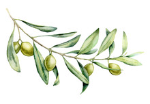 Watercolor Green Olive Branch ...
