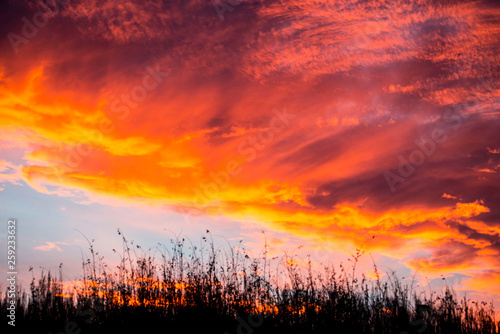 Fiery sunset covers the sky above tall sage grass.