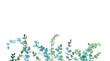 Leinwandbild Motiv Watercolor eucalyptus minimalistic drawing. Hand painted plants, branches, leaves on white background.  Greenery wedding invitation. Natural card design. Isolated on white background.