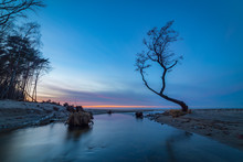 Lonely Tree On The Shore Of A Small River Flowing On The Sandy Beach Of A Baltic Sea