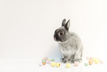 Small Grey Rabbit With Speckled Eggs