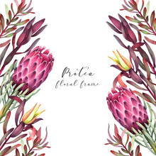 Colorful Protea Flowers Frame ...