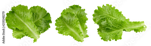 Fototapeta lettuce leaves Clipping Path obraz