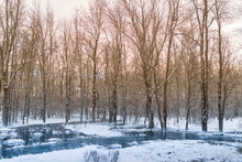 Winter Forest Bounded By Water Covered With Snow And Ice