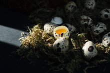 Cracked And Whole Quail Eggs In Nest