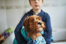 Child Giving His Pet Puppy Dog A Bath