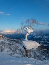 Odd Tree With Mountain Yotei In Sunset