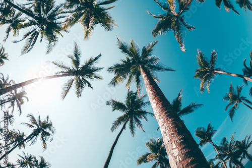 Foto auf Leinwand Blau Jeans View of coconut trees at seaside under blue sky,Sri lanka