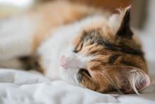 A Close-up Of A Calico Cat Sle...