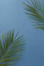 Angled Frame Of Palm Leaves On A Blue Background