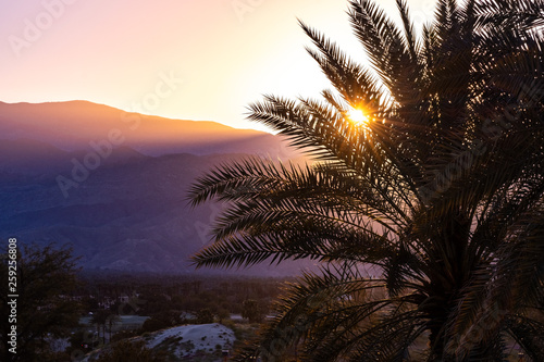 Sunlight illuminating a palm tree at sunset, Palm Springs, California