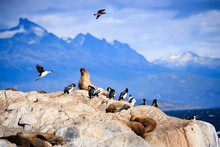Penguines And Sea Lions In Tierra Del Fuego Ushuaia Argentina