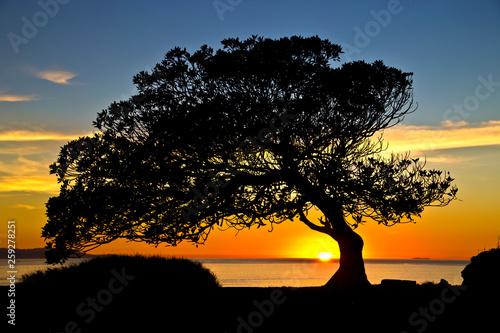 Beautiful tree silhouette at sunset in San Pedro, California