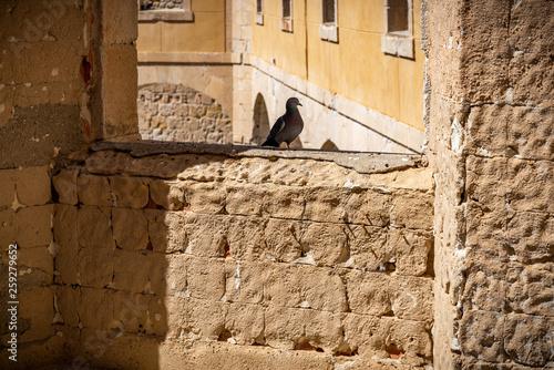 Obraz na płótnie Castillo, ruina fortaleza en Zamora España