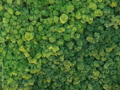 Fotografie, Obraz  creative idea for background of green stabilized moss