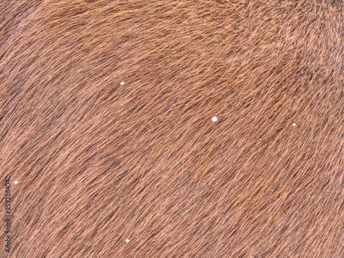 Photo Horse with winter fur, acclimated animal