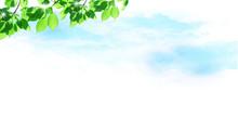 新緑と空(爽やかなイメージ)