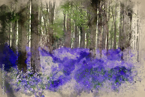 Fotografia, Obraz  Watercolor painting of Vibrant bluebell carpet Spring forest landscape