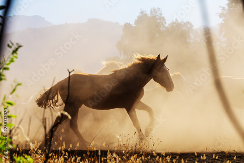 Horse Fototapete