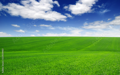 Field and blue sky with white clouds - 259314451