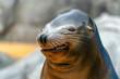 Leinwandbild Motiv Sea lion seal funny face
