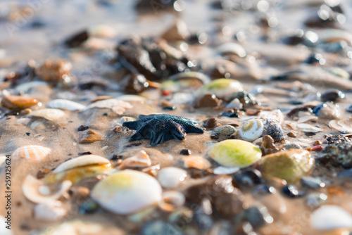 Türaufkleber Makrofotografie starfish on the beach