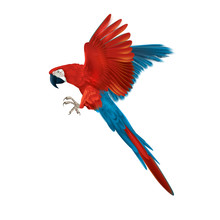 Colourful Macaw Parrot - Multicoloured Isolated Flying Bird- Realistic And Detailed Illustration -  Symmetrical Design