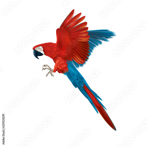 Colourful macaw parrot - multicoloured isolated flying bird- realistic and deta Wallpaper Mural
