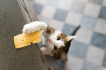 Domestic Cat Trying To Steal Slice Of Cheese From A Table.
