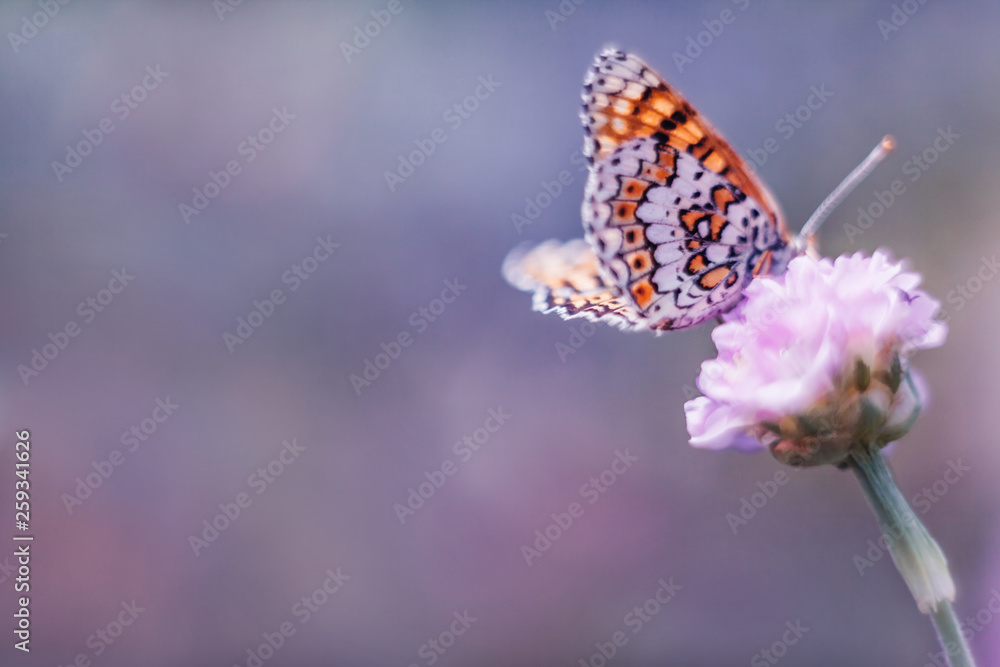 Fototapeta Dreamy romantic artistic image of spring nature with flower and butterfly on blurred background.