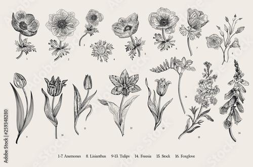 Spring flowers Wallpaper Mural