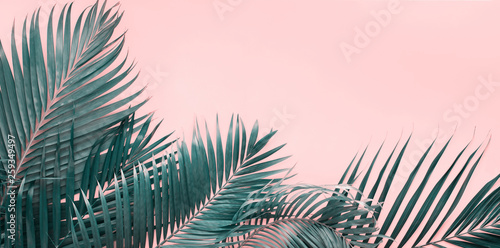 Canvas Prints Palm tree Variations Tropical Palm Leaves Flat Lay Top View