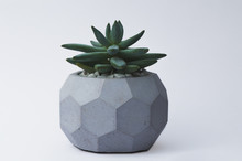 Succulent In A Concrete Pot On A White Background For Designers