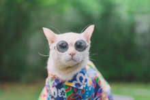 Portrait Of Hipster White Cat ...