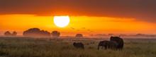 Elephants At Sunrise In Ambose...