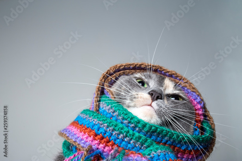Cadres-photo bureau Chat Cute little cat prepared for winter and wrapped in a woolen knitted scarf, on a gray background.
