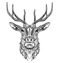 Head Of A Deer. Meditation, Co...